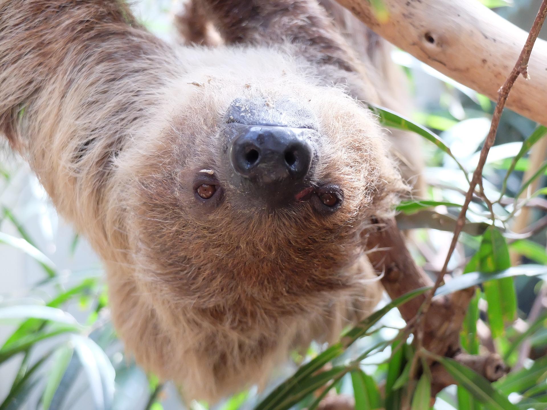 sloth-1740761_1920
